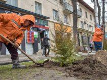 «Бишкекзеленхоз» завершает сезон зимних посадок деревьев