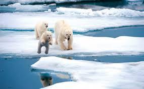 Учёные назвали причину рекордно тёплой зимы