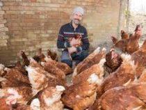В Германии в аренду можно взять курицу-несушку