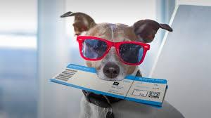 В Дании собаке заплатили компенсацию за отмену авиарейса