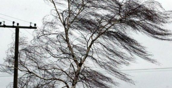 Сильный ветер ожидается сегодня  в Бишкеке