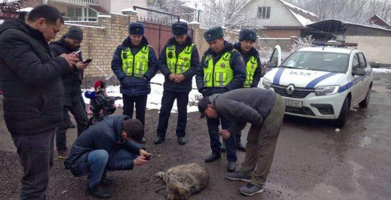 В Бишкеке поймали волка