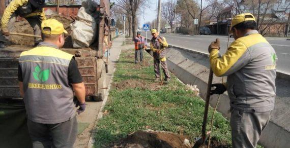 В Бишкеке продолжаются весенние посадочные работы