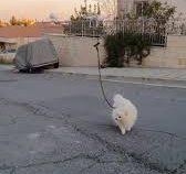 Не желая лично гулять с питомцем, хозяин отправил с ним дрон