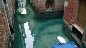 Даже лебеди приплыли. В каналах Венеции из-за отсутствия туристов очистилась вода