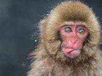 В Индии обезьяны вынудили пограничников переодеться в медведей