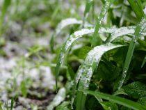 Апрельские заморозки нанесли фермерам серьезный ущерб