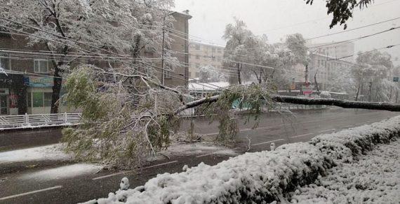 В Бишкеке из-за непогоды повалены деревья