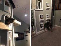 Житель США построил для своих котов многоэтажные дома