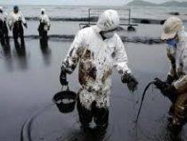 В Арктике обнаружены бактерии, уничтожающие нефть