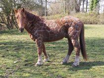 Британка подстригла лошадь «под жирафа»