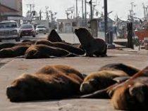 Аргентинский город захватили морские львы