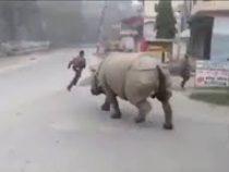 В Непале носорог прогнал «нарушителей карантина» с улицы