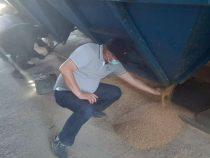 В Кыргызстан из России доставили вторую партию пшеницы