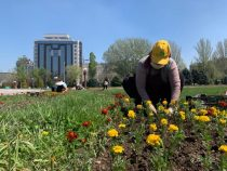 Более миллиона цветов будут высажены в столице в начале мая