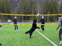 В Норвегии спортсмены на карантине научили собаку играть в волейбол