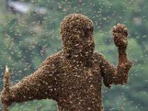 На западе Гватемалы рой пчел атаковал местных жителей