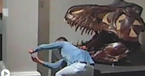 Австралиец проник в музей ради селфи с черепом динозавра