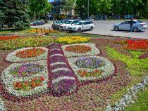 В Бишкеке появилась очередная цветочная композиция
