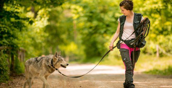 Туристам в Австрии предложили прогуляться с волками