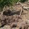 В Токтогульском районе сошли сели