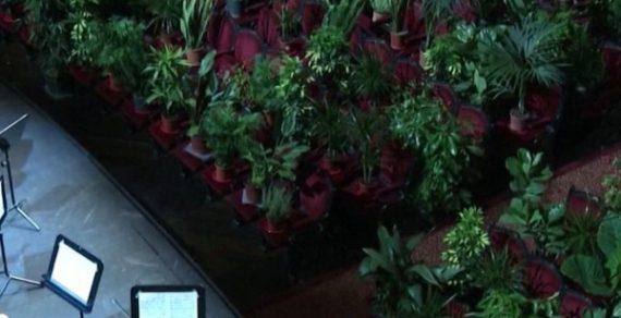 Зеленые зрители: оперный театр в Барселоне дал концерт для фикусов и пальм