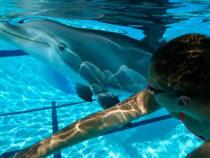 В Китае появился робот – дельфин