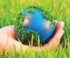 Земля за 30 лет потеряла 178 млн га леса