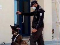 Полиция ОАЭ начала использовать собак для выявления коронавируса у людей
