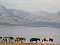 Пастбища и горная местность Нарынской области для туристов не закрыты
