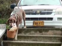 Собака доставляет товары на дом покупателям в Колумбии
