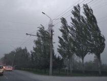 МЧС предупреждает бишкекчан об усилении ветра в ближайшие часы