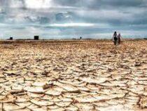 Ученые признали засуху 2018-2019 годов самой сильной с середины 18 века