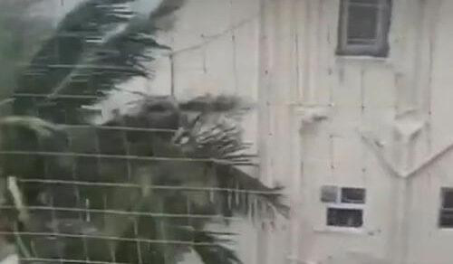 Из-за непогоды пальма стала «одержимой»
