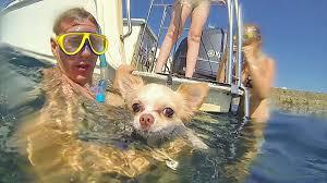 В Дубае открыли мини-аквапарк для собак