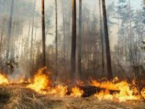В Калифорнии 119 тысяч человек эвакуированы из-за лесных пожаров