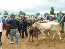 В Кочкорском районе завтра откроется скотный рынок