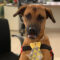 Бразильский автосалон взял на работу бездомного пса