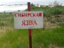 У восьми жителей села Тогуз-Булак подозревают сибирскую язву