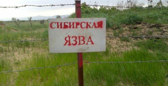 Владелец зараженного сибирской язвой быка оштрафован