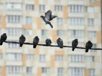 Квартиру студента за время карантина обгадили голуби