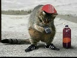 Испанец завел 110 котов в квартире и был выселен