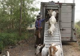 В штате Орегон в борьбе с пожаром используют животных