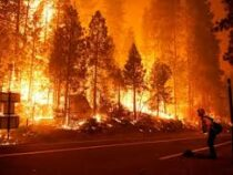 Назападе США свыше полутора миллионов гектаров леса охвачено пожарами
