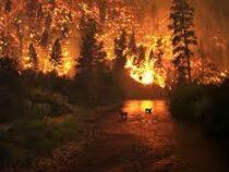 ВСША сто природных пожаров тушат втрех штатах