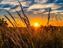 Нынешнее лето стало самым жарким в истории на Северном полушарии