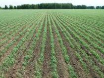 Фермеры в КР получили девять тысяч льготных кредитов