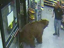 В Калифорнии медведь ворвался в магазин и ограбил его