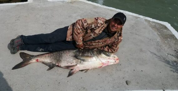 В реке Талас поймали рыбу размером с человеческий рост.