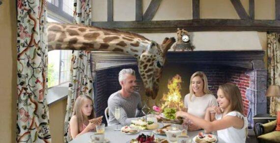 В Великобритании появился отель «Жираф-холл» посреди сафари-парка